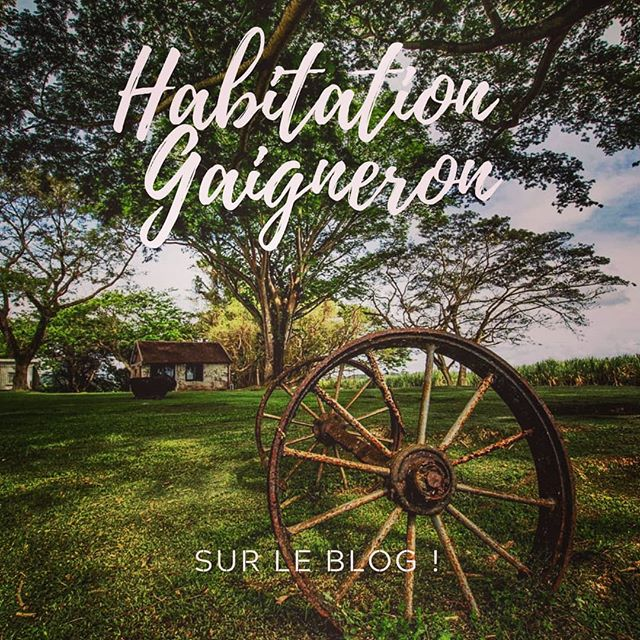 Martinique, Habitation Gaigneron ----------------------- . . . . . . #sugarcane_lane #fwi #Antilles #caribbeandreams #train #gaigneron #heritage #history #discovermartinique #france4dreams #iamfrommartinique #ig_caribbean #tree #matnik  #ig_caribbeansea #ig_martinique #martiniquemagnifique #visitmartinique #westindies #martiniquetourisme