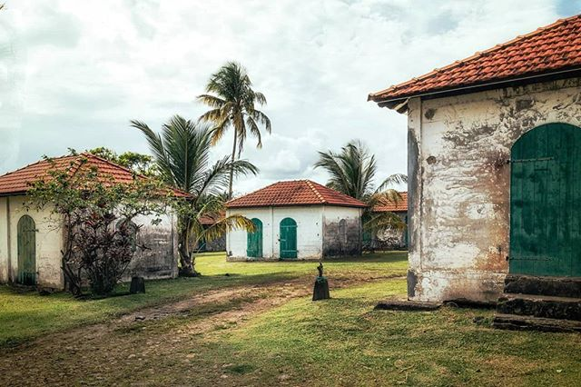 Martinique, Le Lamentin --------------------- . . . .. . #sugarcane_lane #fwi #Antilles #caribbeandreams #train #gaigneron #heritage #history #discovermartinique #france4dreams #iamfrommartinique #ig_caribbean #ig_caribbeansea #ig_martinique #martiniquemagnifique #visitmartinique #westindies #martiniquetourisme #matnik #tree