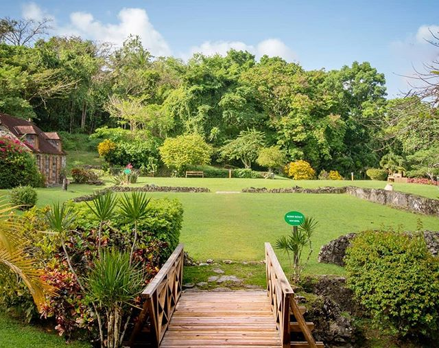 Martinique, Domaine de la Pagerie :  Le musée est installé dans l'ancienne cuisine, une maisonnette en pierres, sur un site joliment entretenu bien que marqué par le temps : la maison est détruite par un ouragan en 1766. Joséphine et sa famille emménagent à l'étage de la sucrerie, au milieu des vapeurs suffocantes des chaudières et à proximité des esclaves. Pas très classe pour la société béké de l'époque qui regarde les Tascher de travers. --------------------------- #sugarcane_lane#fwi#Antilles#caribbeandreams#lapagerie #museum#imperial#heritage#history#discovermartinique#france4dreams#iamfrommartinique#ig_caribbean #ig_caribbeansea#ig_martinique #martiniquemagnifique #visitmartinique #westindies #martiniquetourisme#matnik #tree #napoleon #bonaparte