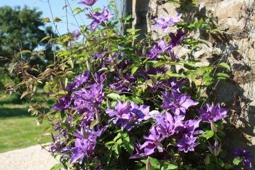 La Faisanderie - fleurs