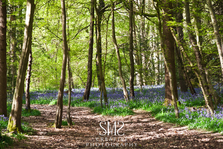 SMS Creative Photography Bluebells  Surrey