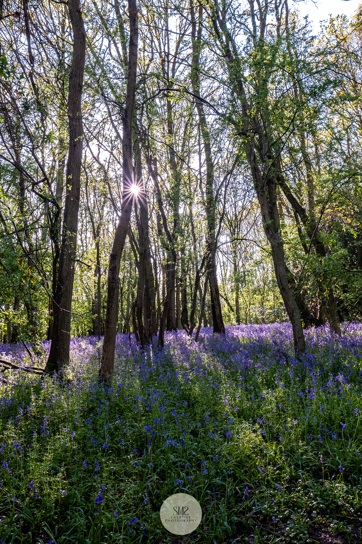 SMS Creative Photography - Bluebells569c.jpg