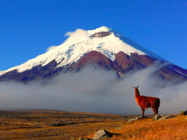 Chimborazo with one of its fluffy friends