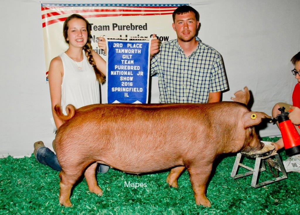 Third Overall Tamworth Gilt