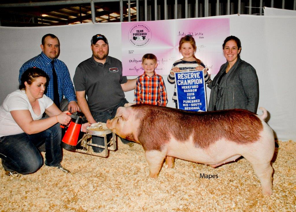Reserve Grand Champion Hereford Barrow