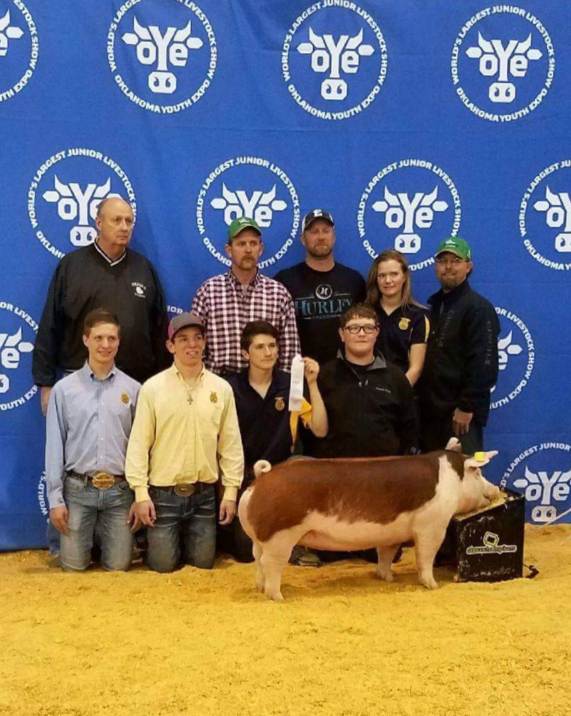 OYE 3rd Overall Hereford Gilt