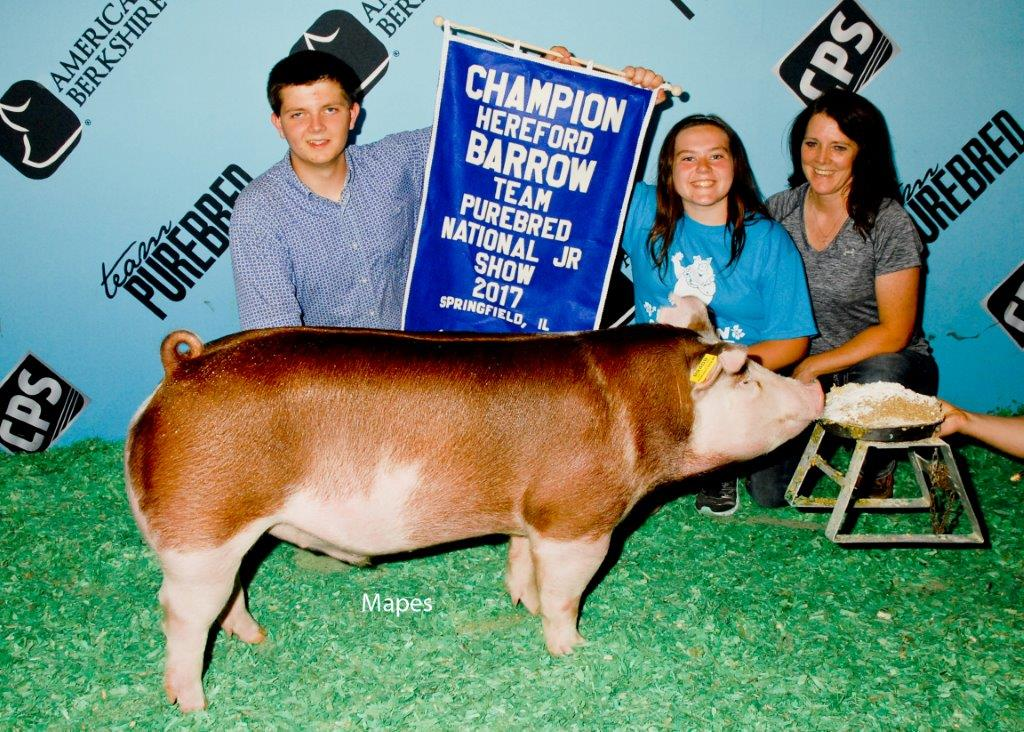 NJS Champion Hereford Barrow
