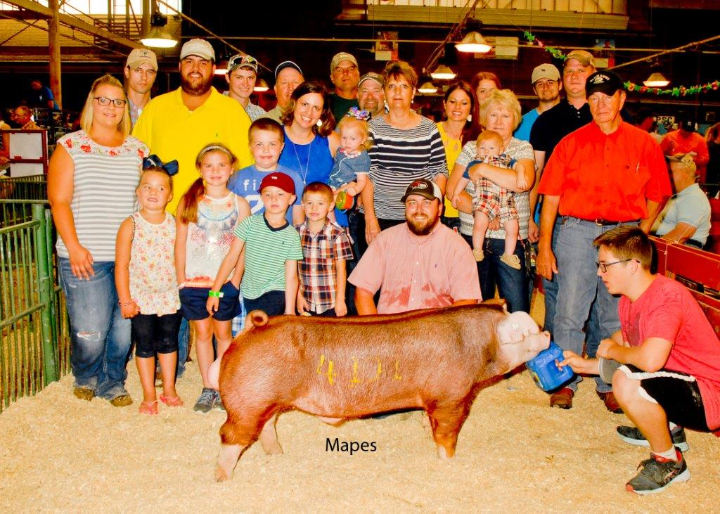 CPS STC Champion Hereford Boar