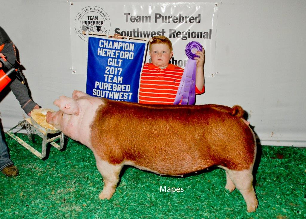 TP Southwest Champion Hereford Gilt