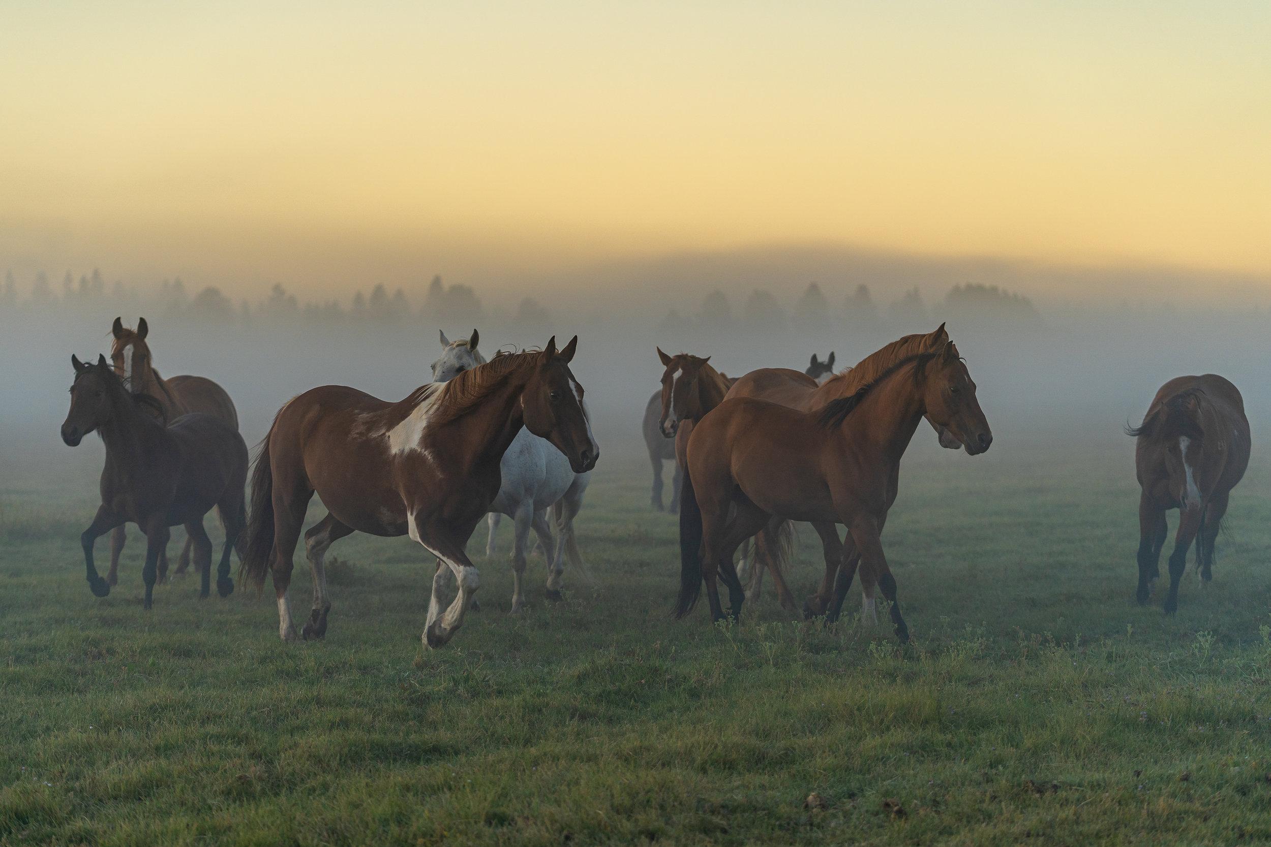 Cowgirls at Sunrise shoot - Sony Kando | Devonta White