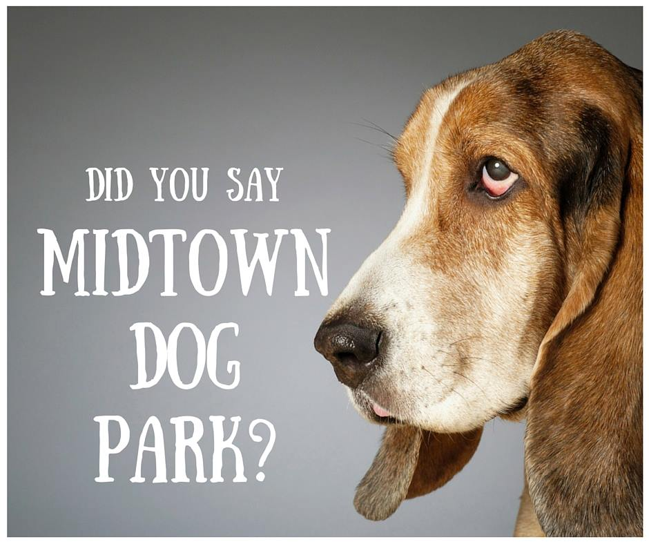 crawford-dog-park.jpg