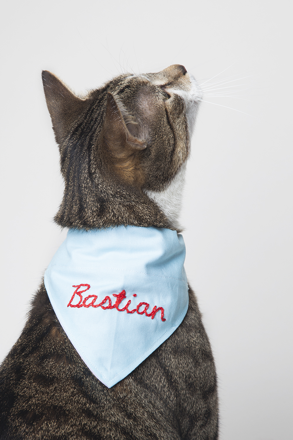 design-sponge-pet-bandana-cat-1381.jpg