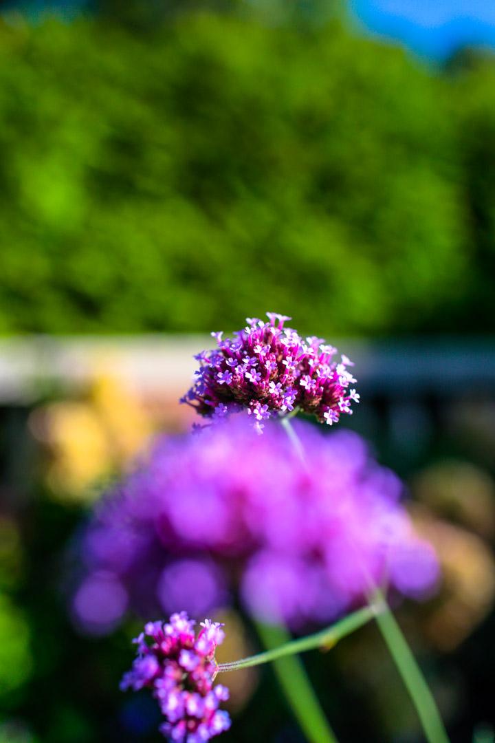 bally_floral_jp2015-4821.jpg
