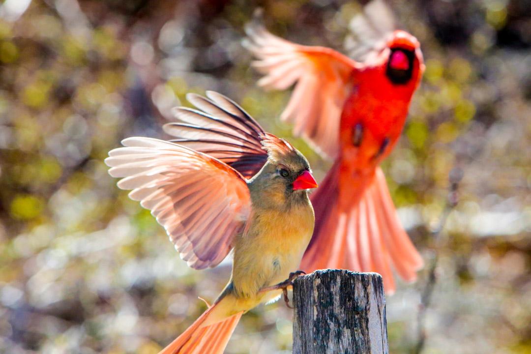 morton_sanc_birds-0946.jpg