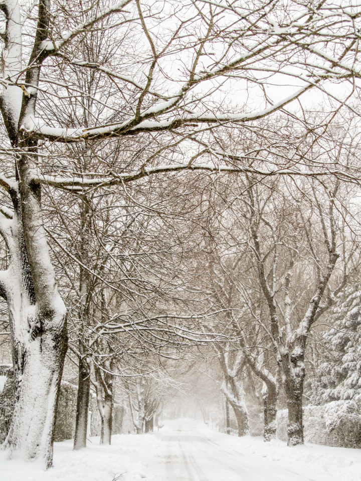 winter2011-0371.jpg