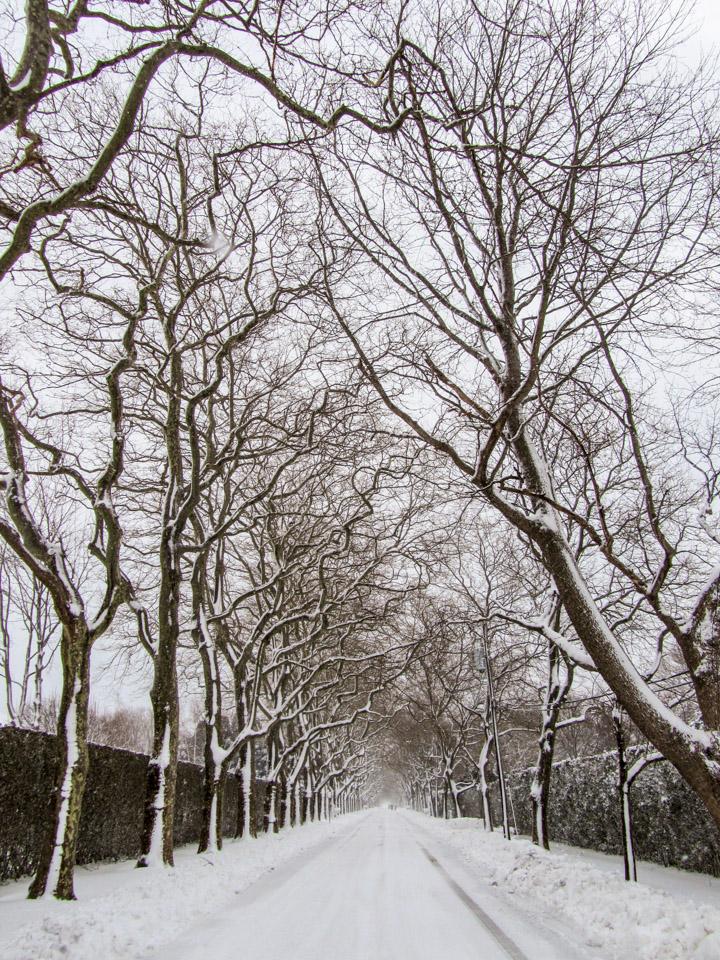 winter2011-0382.jpg