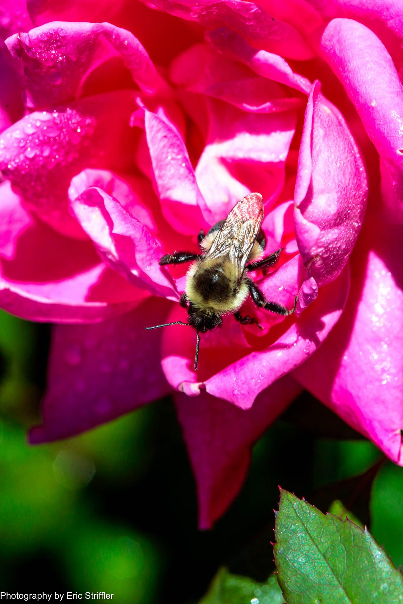 Bal_garden_closeups-9752.jpg