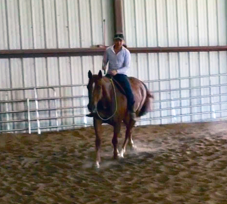 horse bedding puritan premium testimonial