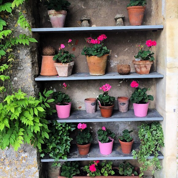 A pretty display of geraniums in pots - very easy to look after. #geraniums #gardendesign #plantsinpots  #plantsonshelves #gardenshelves #perennials #pink #pinkflowers