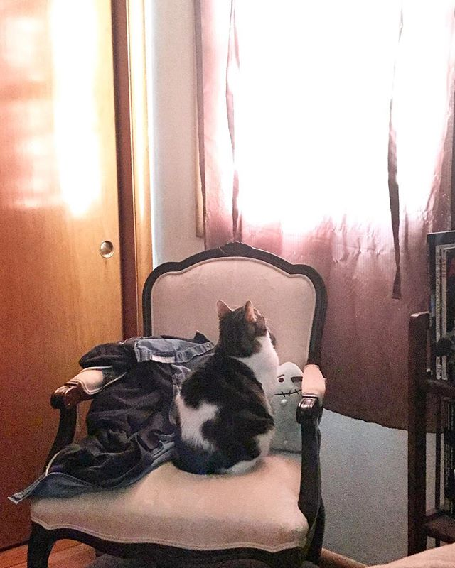 First thing every morning, she watches her stories. #margo #cat #characteractressmargomartindale