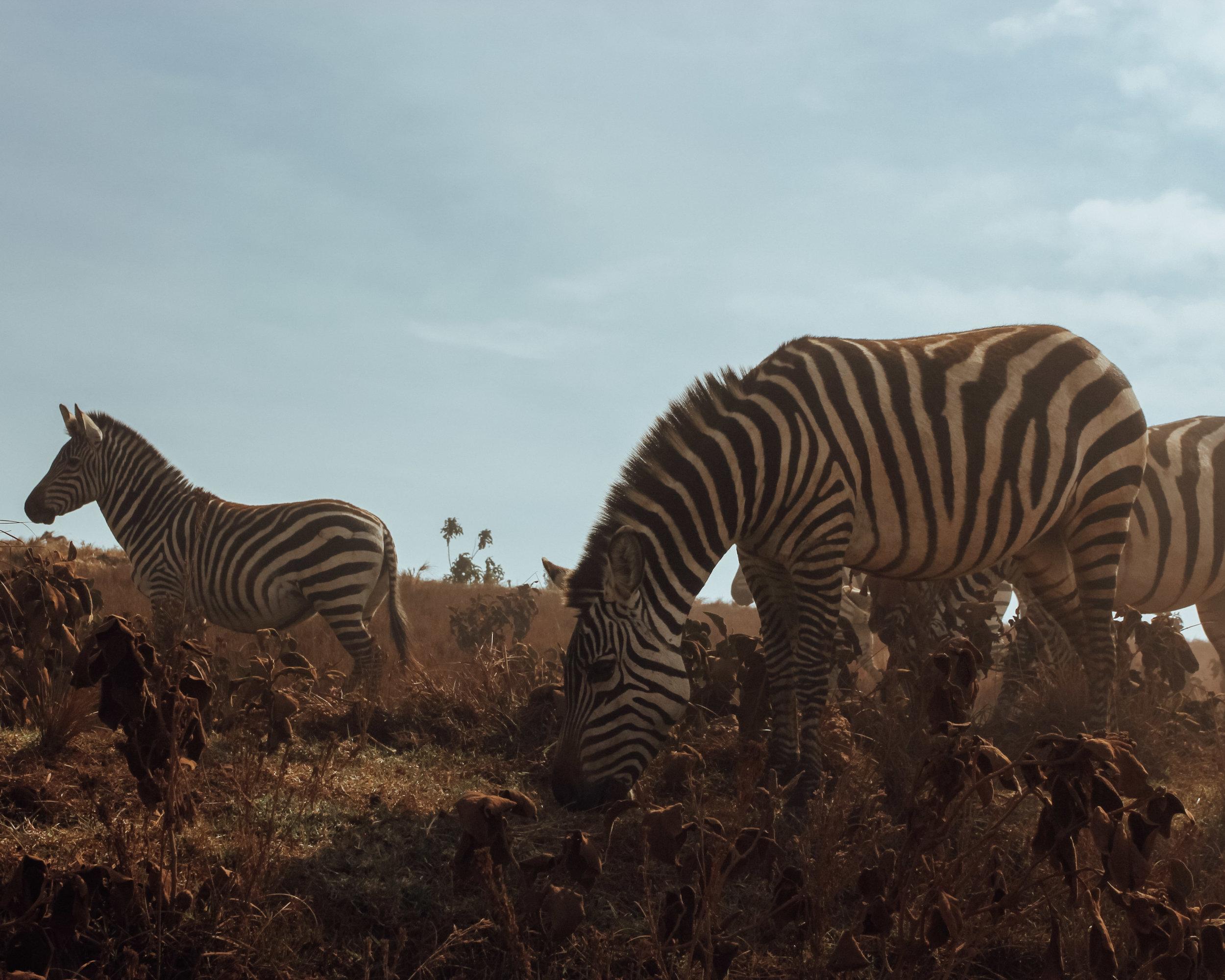 Christine Wheeler - Ngorongoro Safari-34.jpg