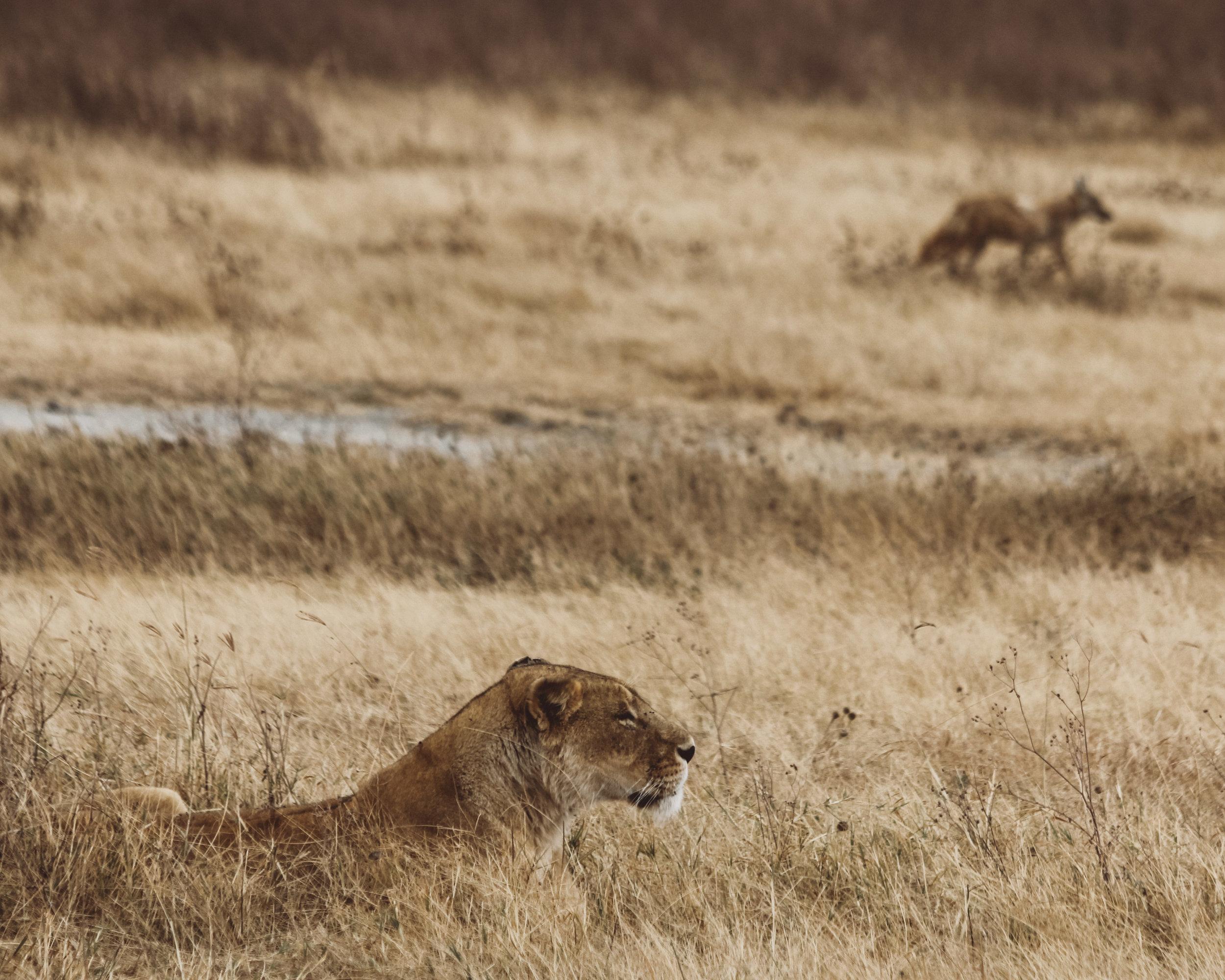 Christine Wheeler - Ngorongoro Safari-5.jpg