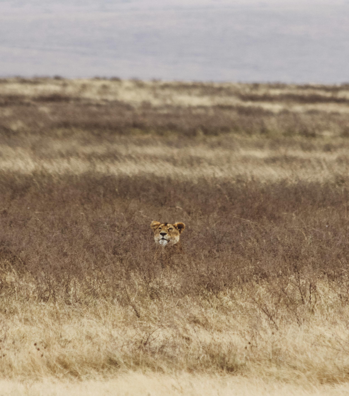 Christine Wheeler - Ngorongoro Safari-6.jpg