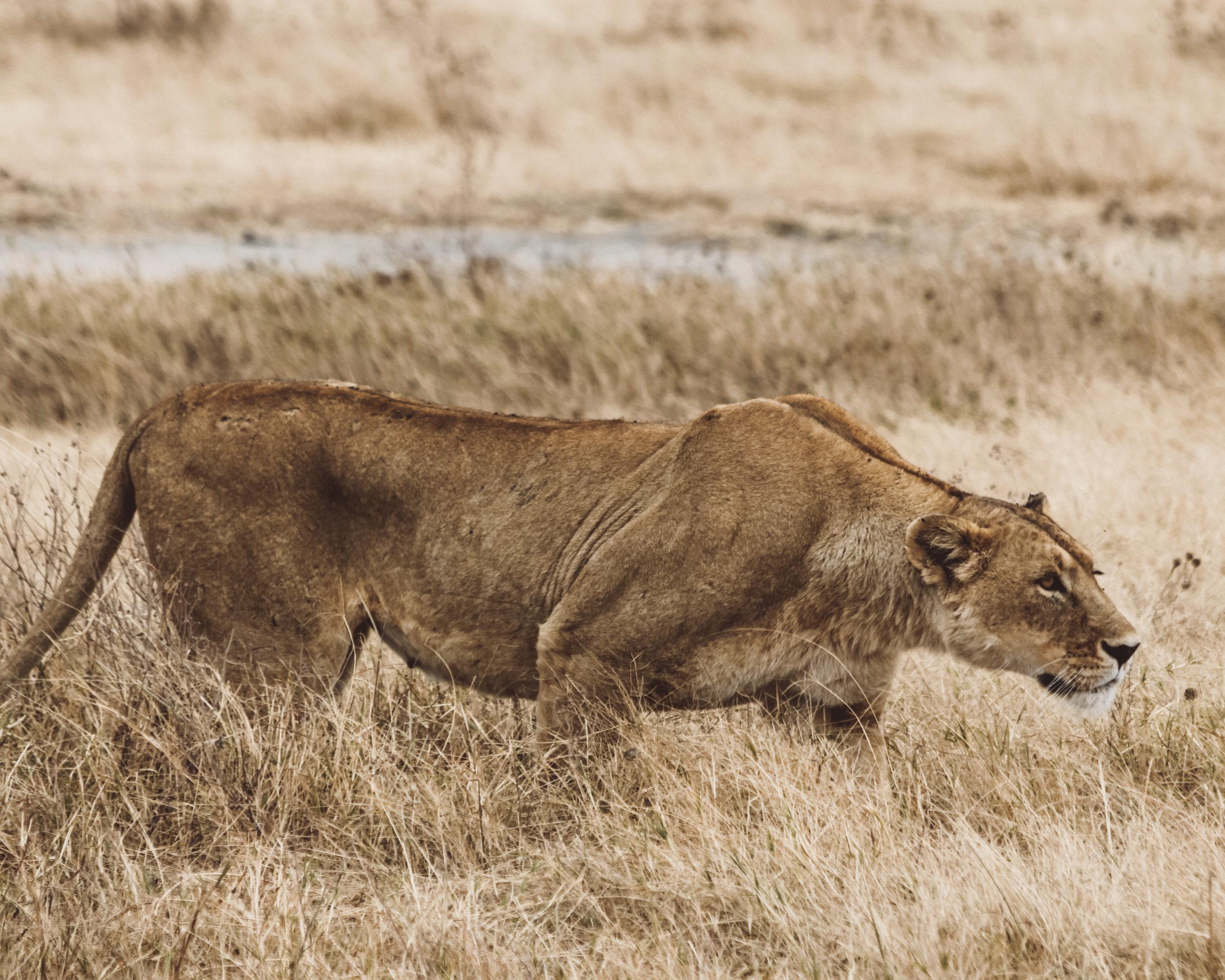Christine Wheeler - Ngorongoro Safari-7.jpg