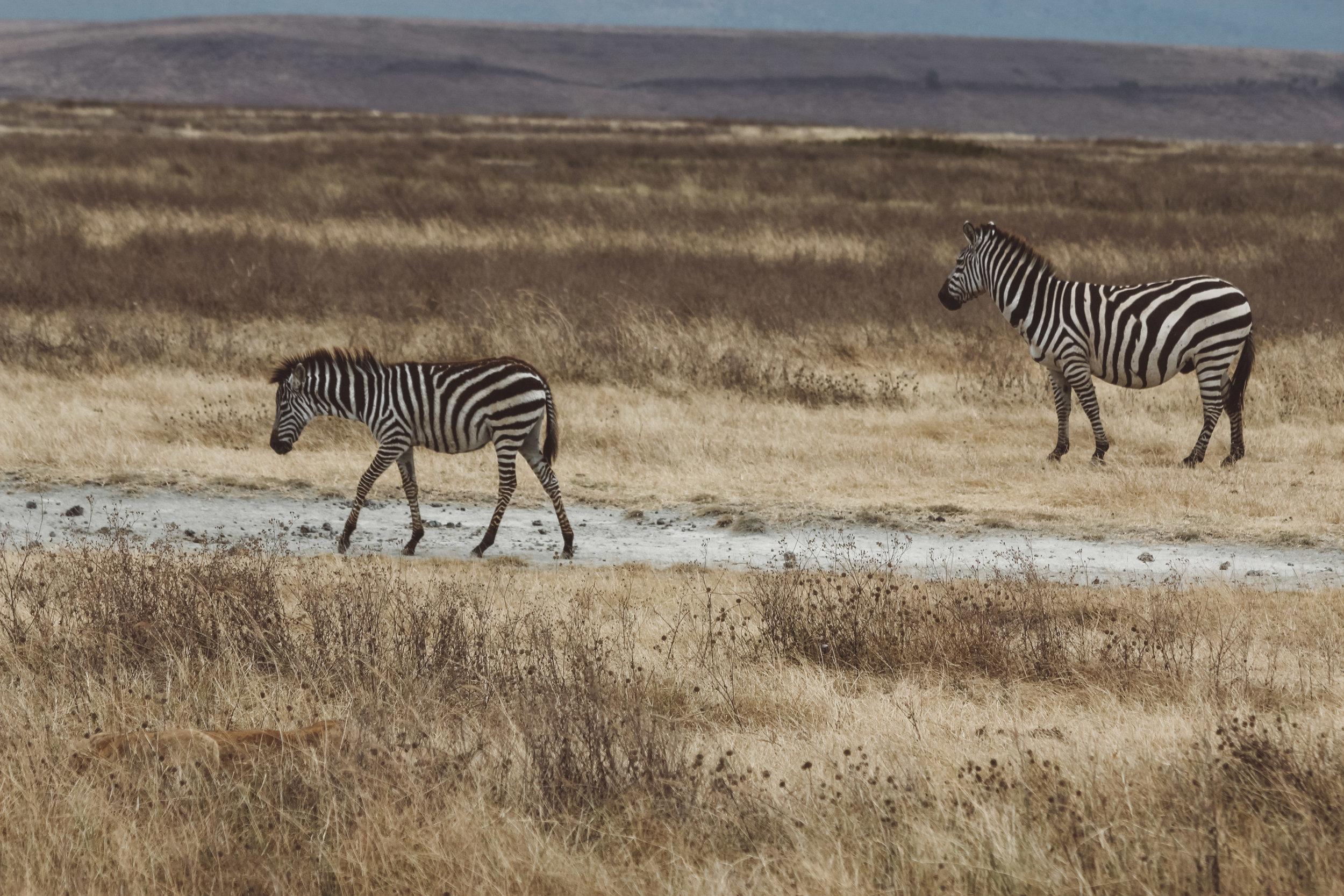Christine Wheeler - Ngorongoro Safari-8.jpg