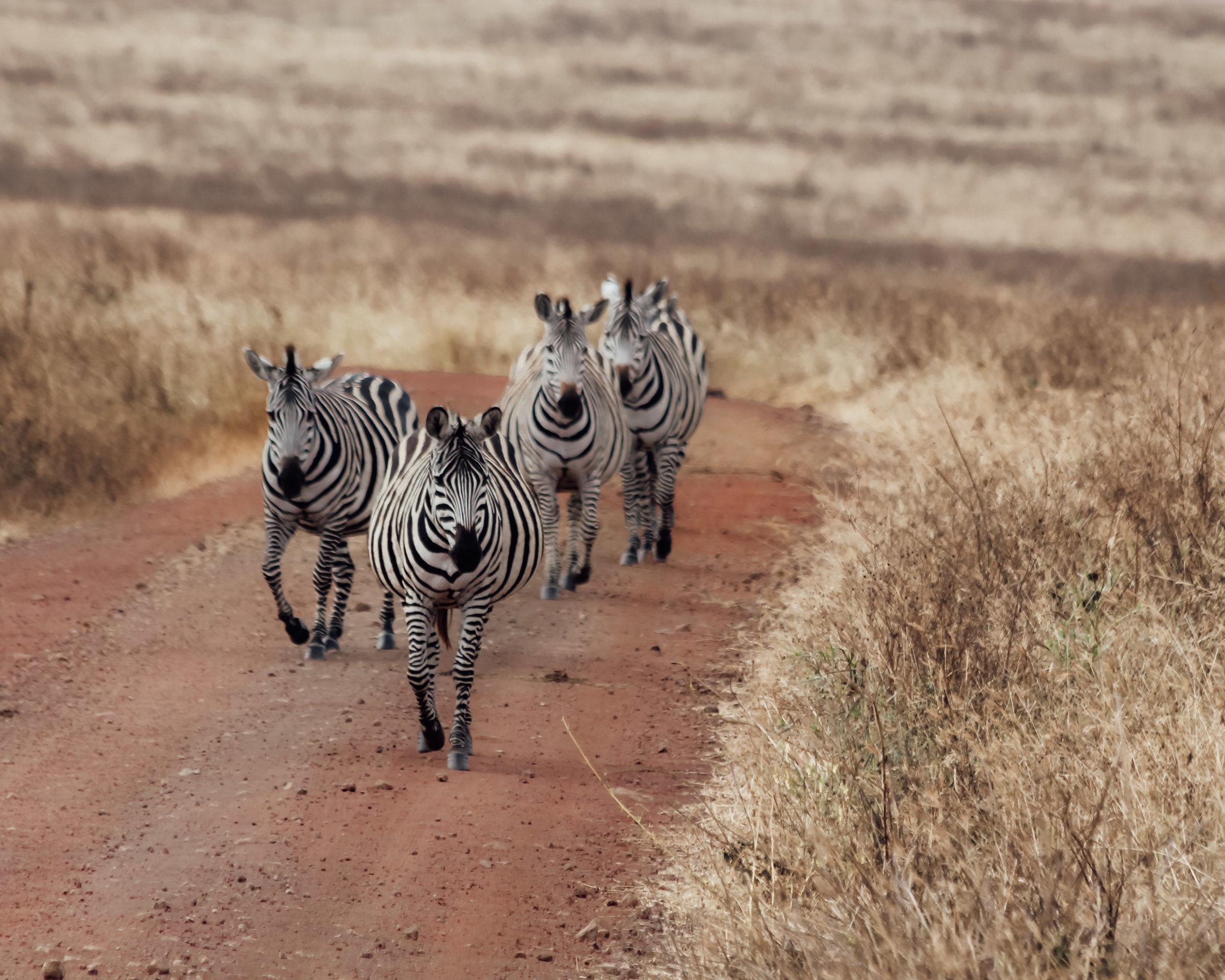 Christine Wheeler - Ngorongoro Safari-27.jpg