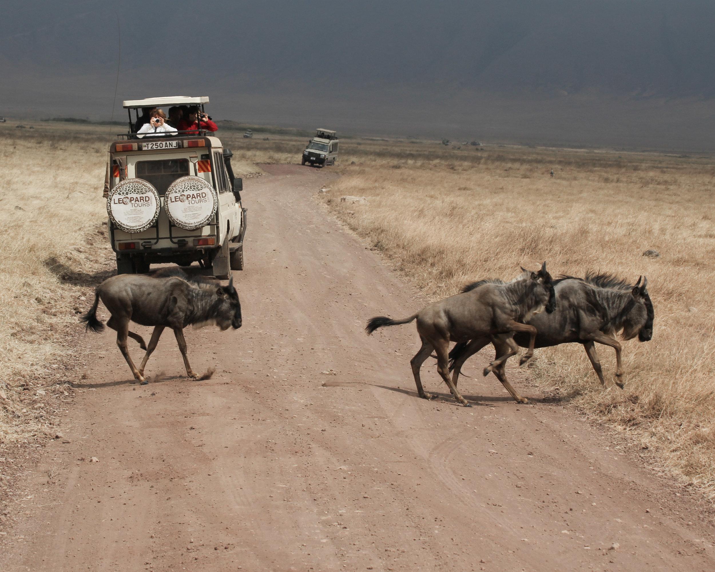 Christine Wheeler - Ngorongoro Safari-21.jpg