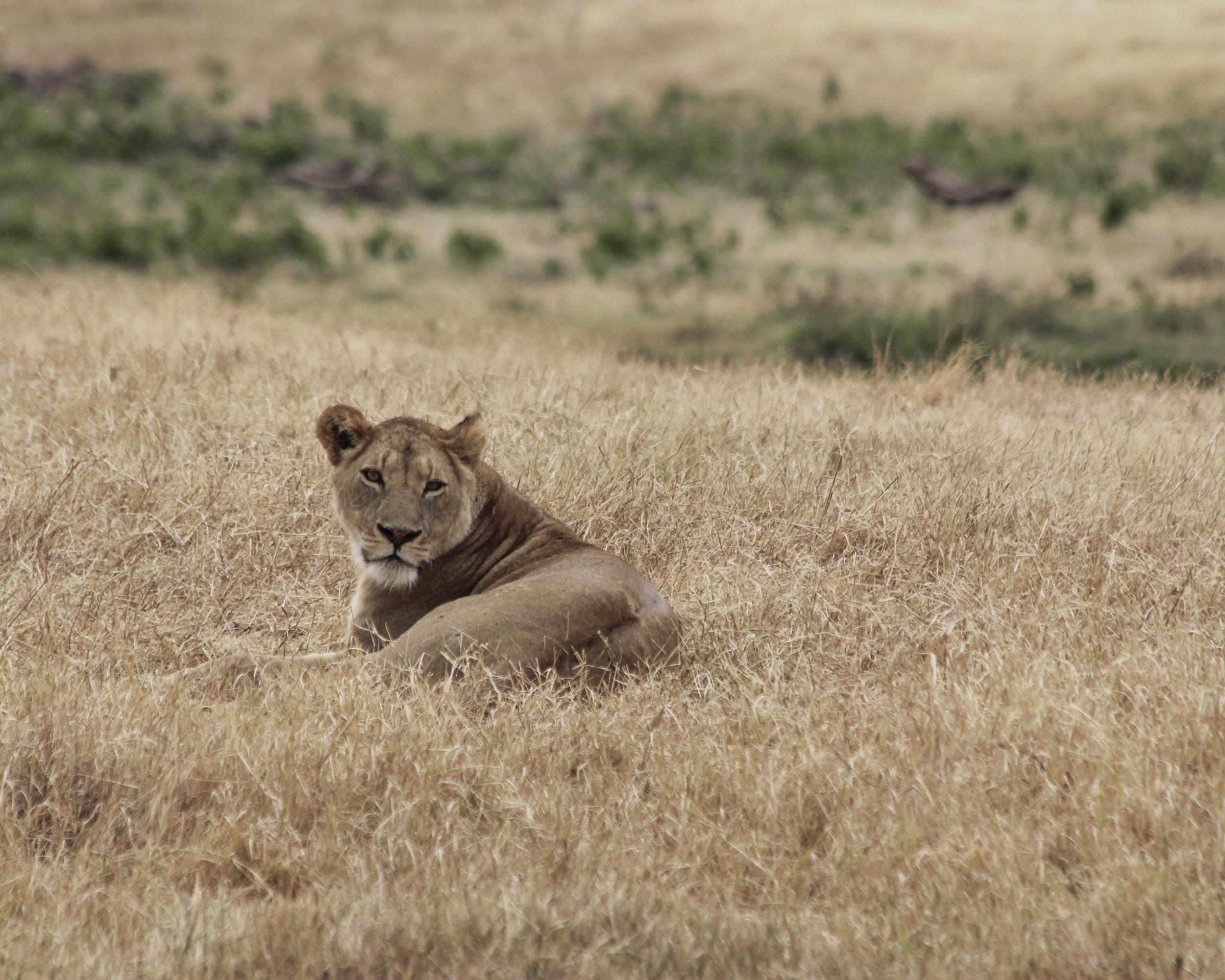 Christine Wheeler - Ngorongoro Safari-22.jpg