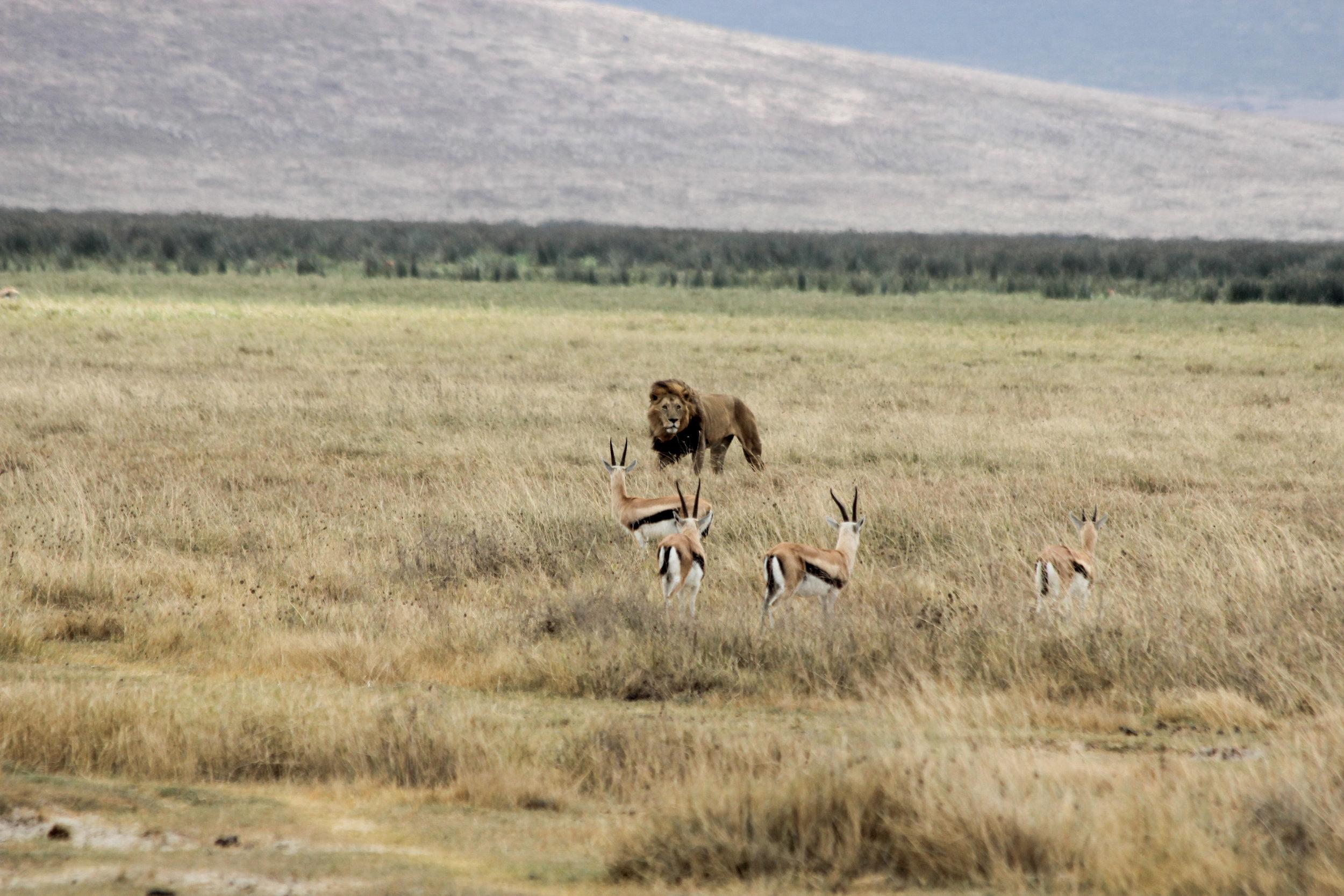 Christine Wheeler - Ngorongoro Safari-17.jpg