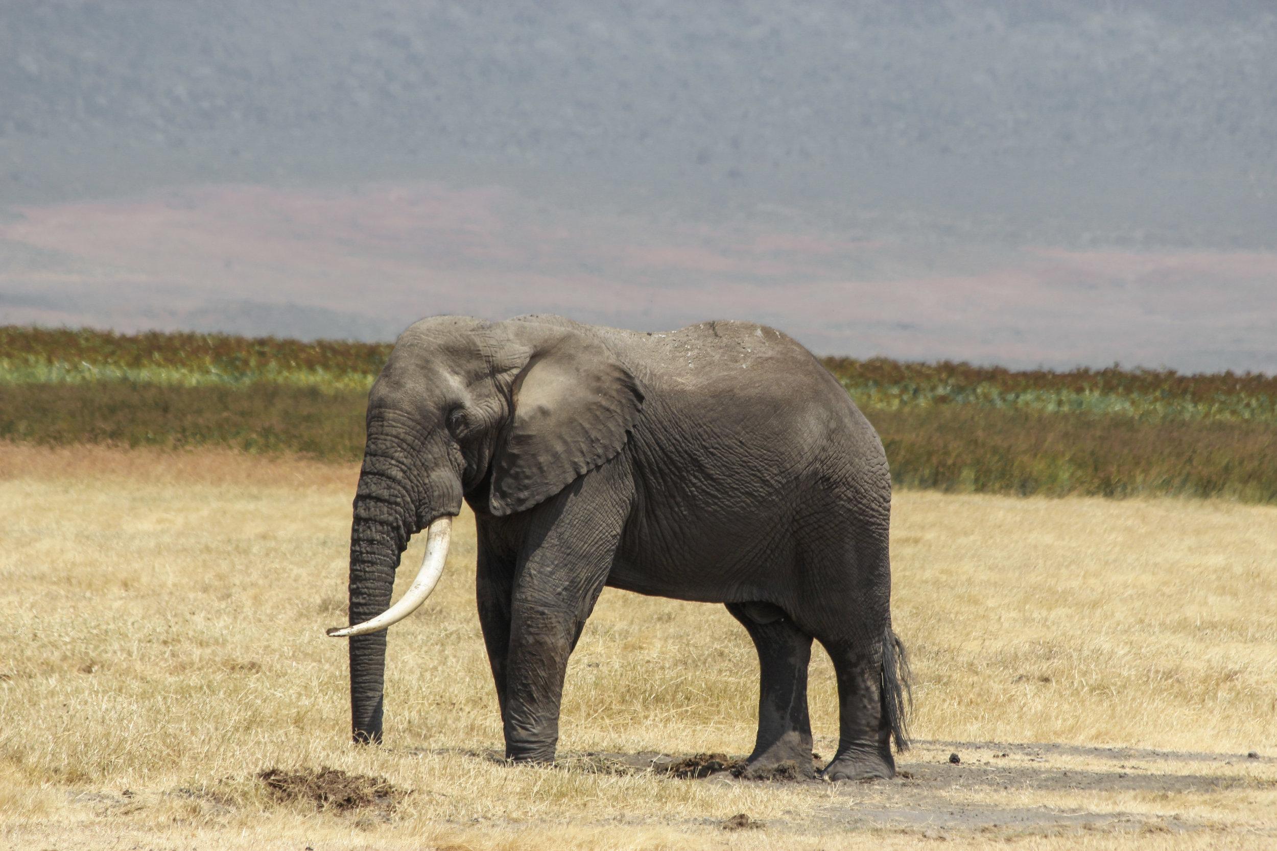 Christine Wheeler - Ngorongoro Safari-10.jpg