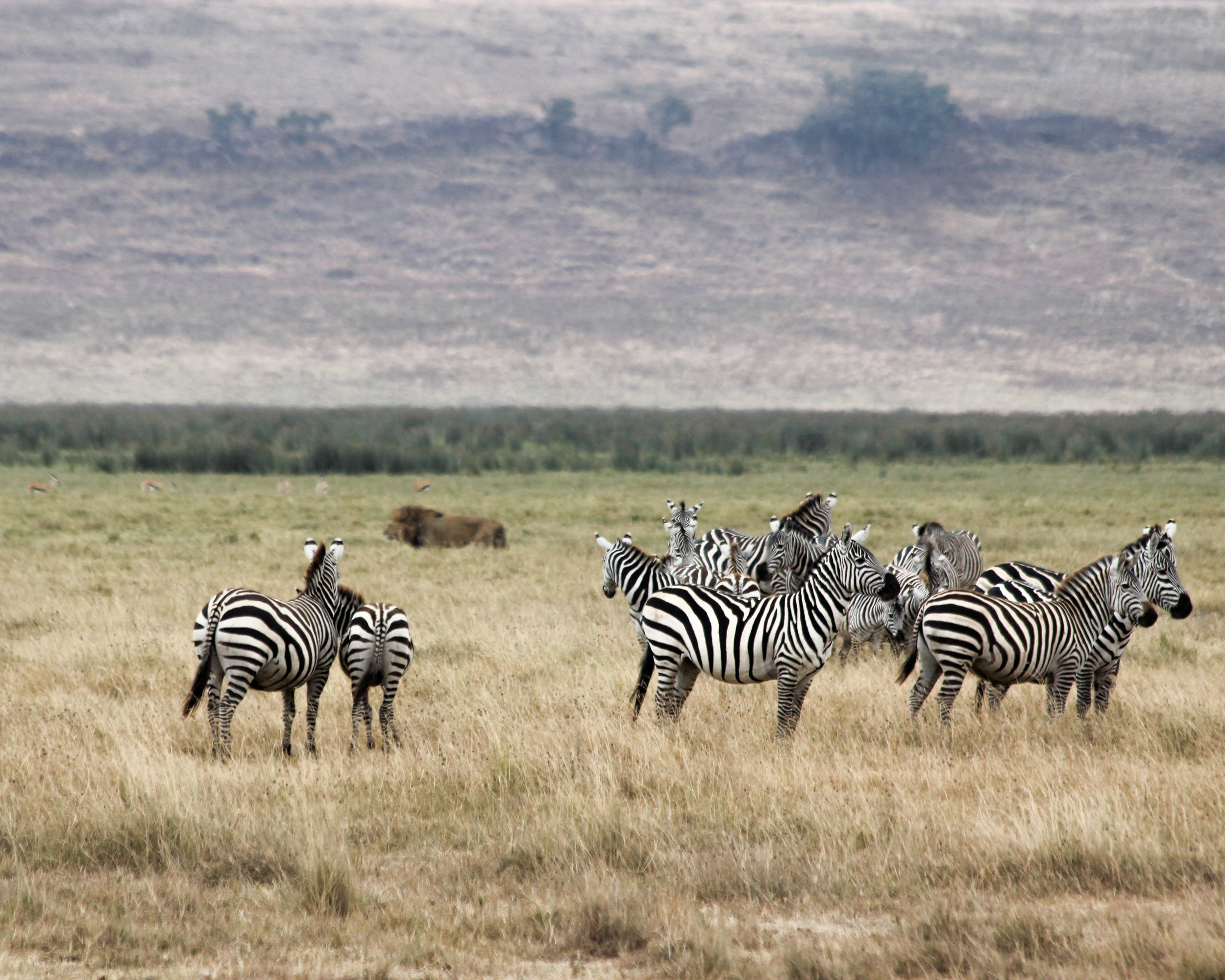 Christine Wheeler - Ngorongoro Safari-18.jpg
