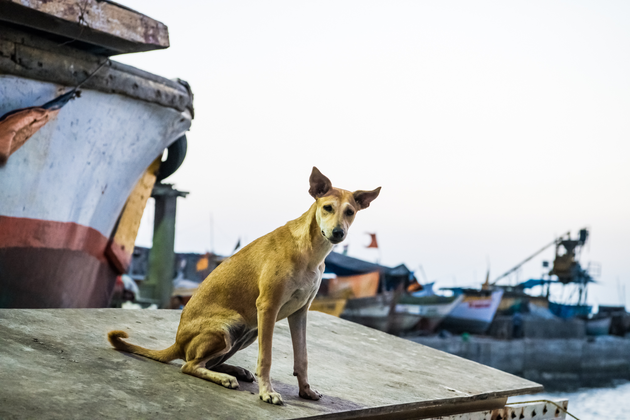 thetravelhub_india_mumbai dog.jpg