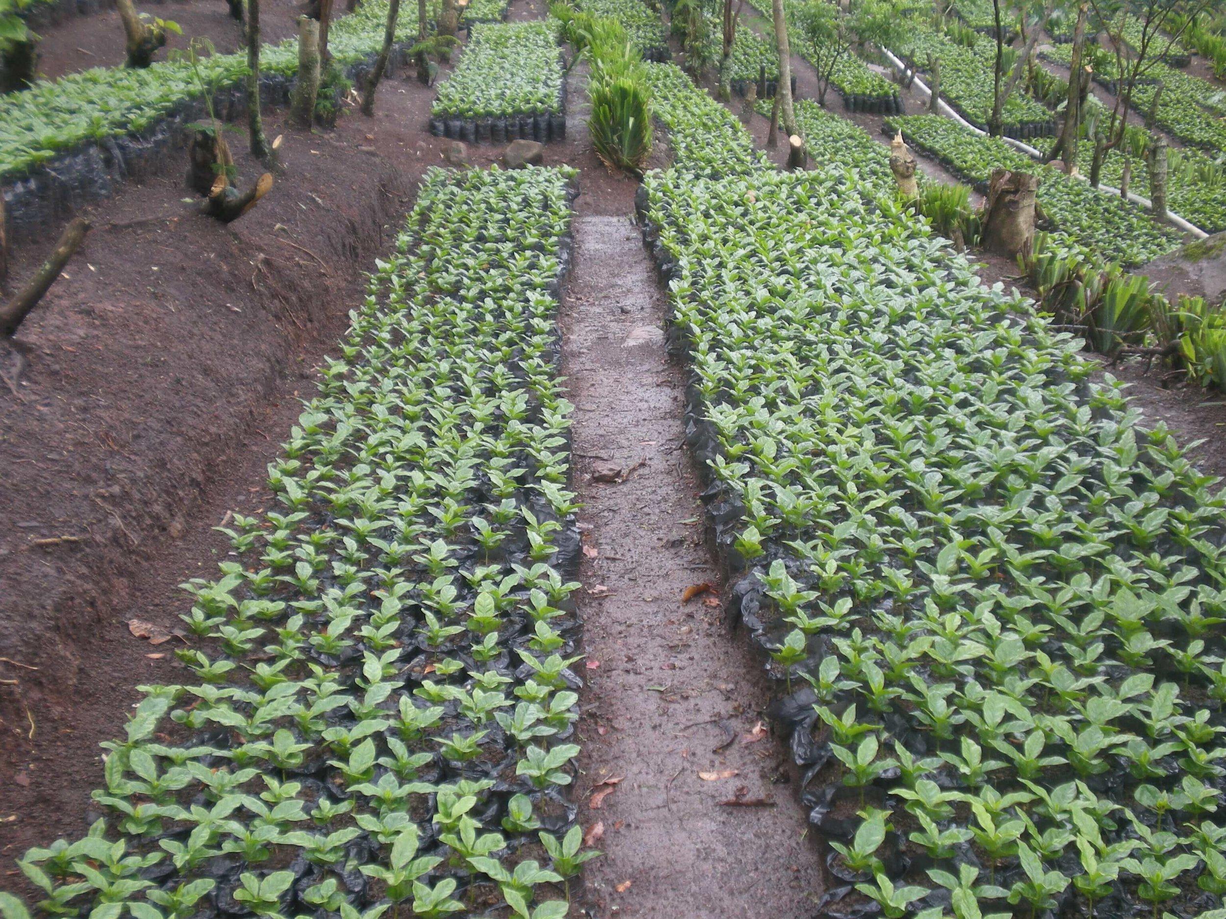 plant-nursery-1.jpg