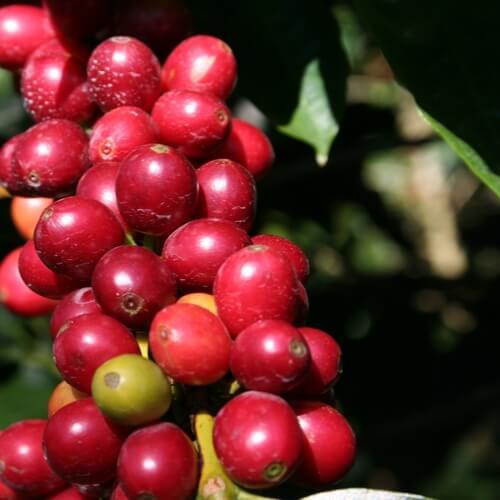 sustainable-coffee.jpeg