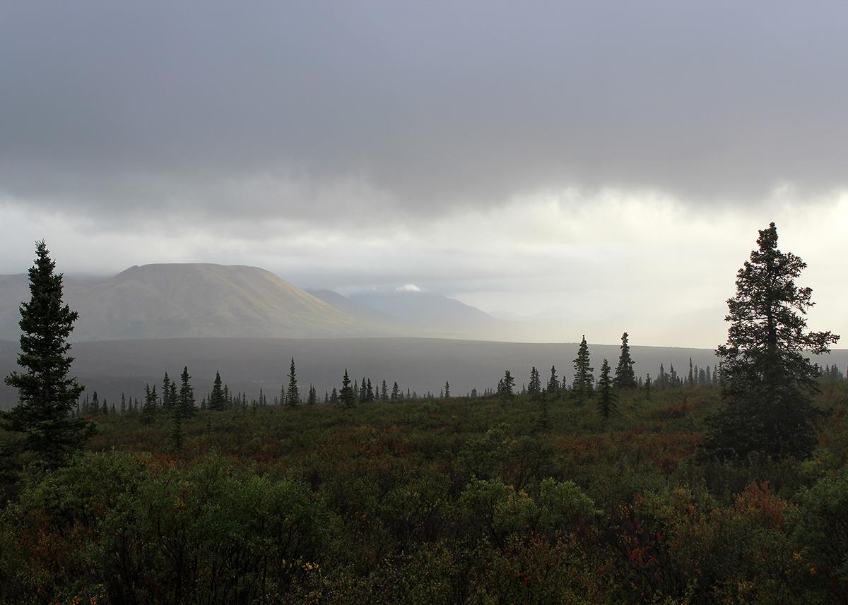 OITP Denali Rain web.jpg