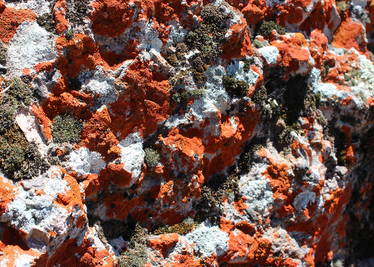 OITP Pinnacles Lichen web.jpg