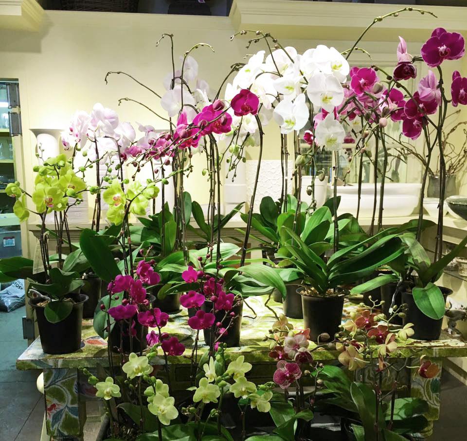 purpleorchid_selectionofplants.jpg