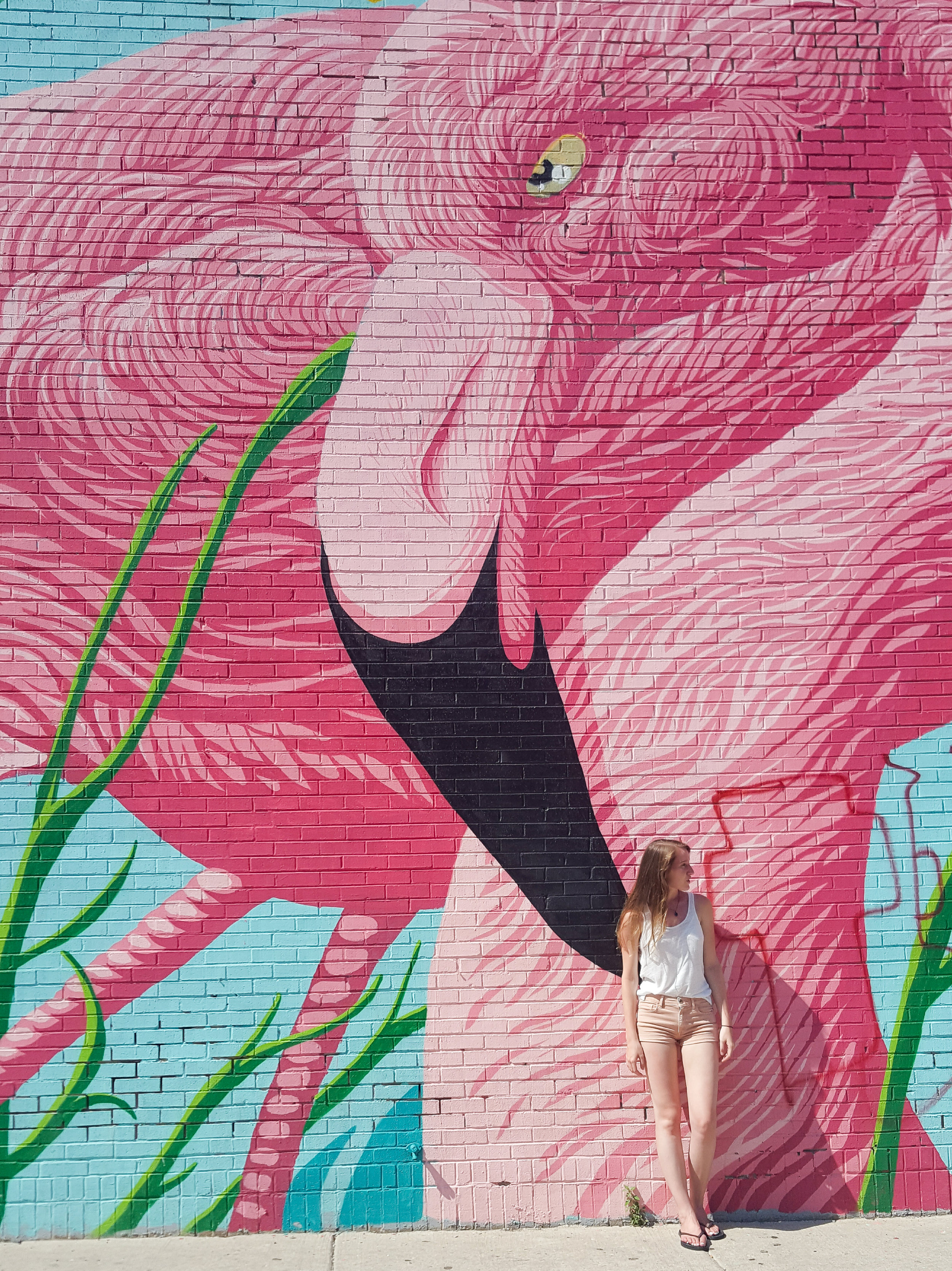 Possibly the most photogenic wall in Chicago - the flamingo wall at the Flamingo Rum Club