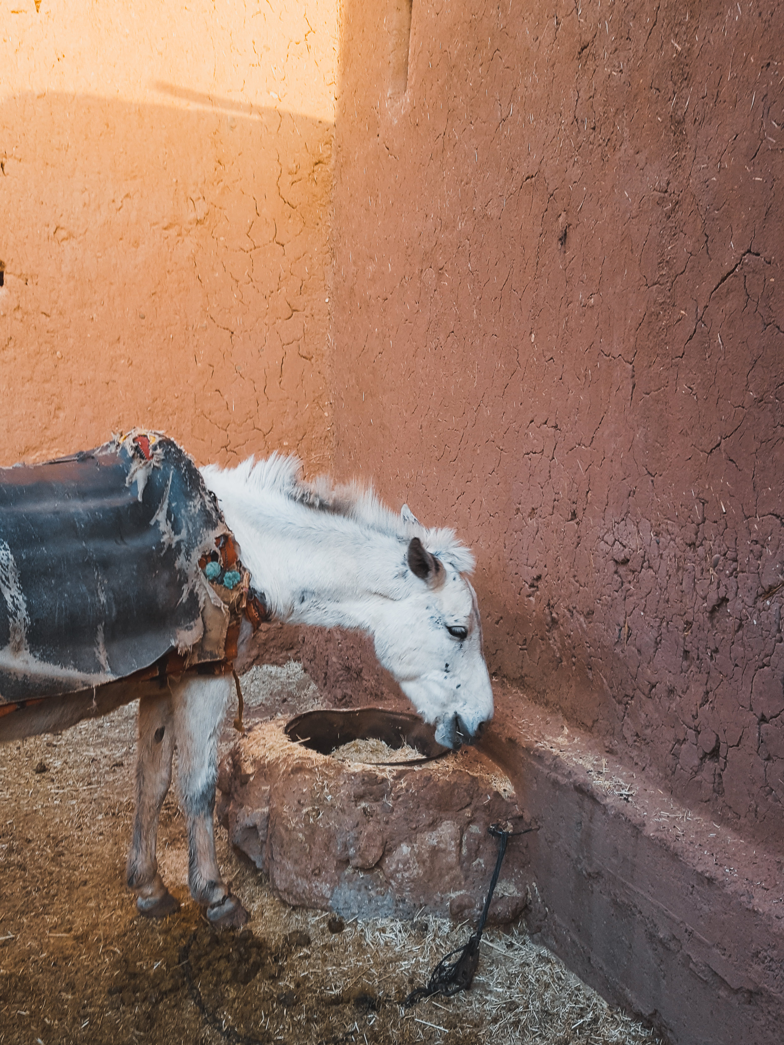 Donkeys are often used to transport goods in Morocco - we found this cutie at Ait Benhaddou