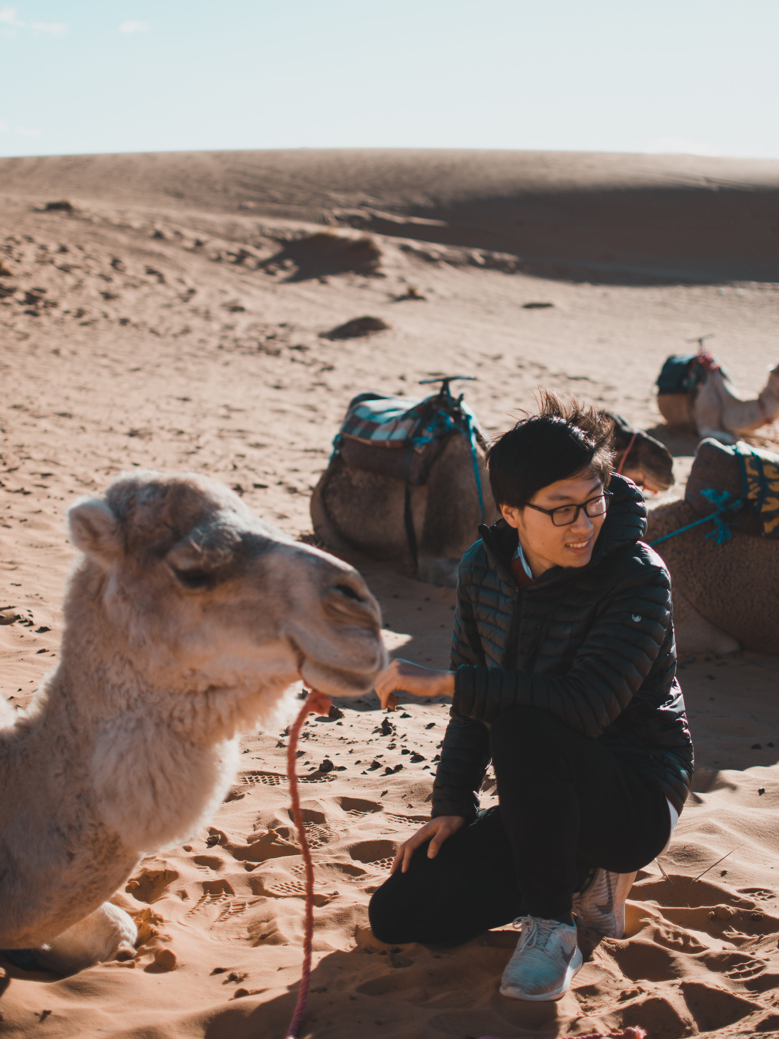 Befriending camels on our Sahara Desert tour in Morocco