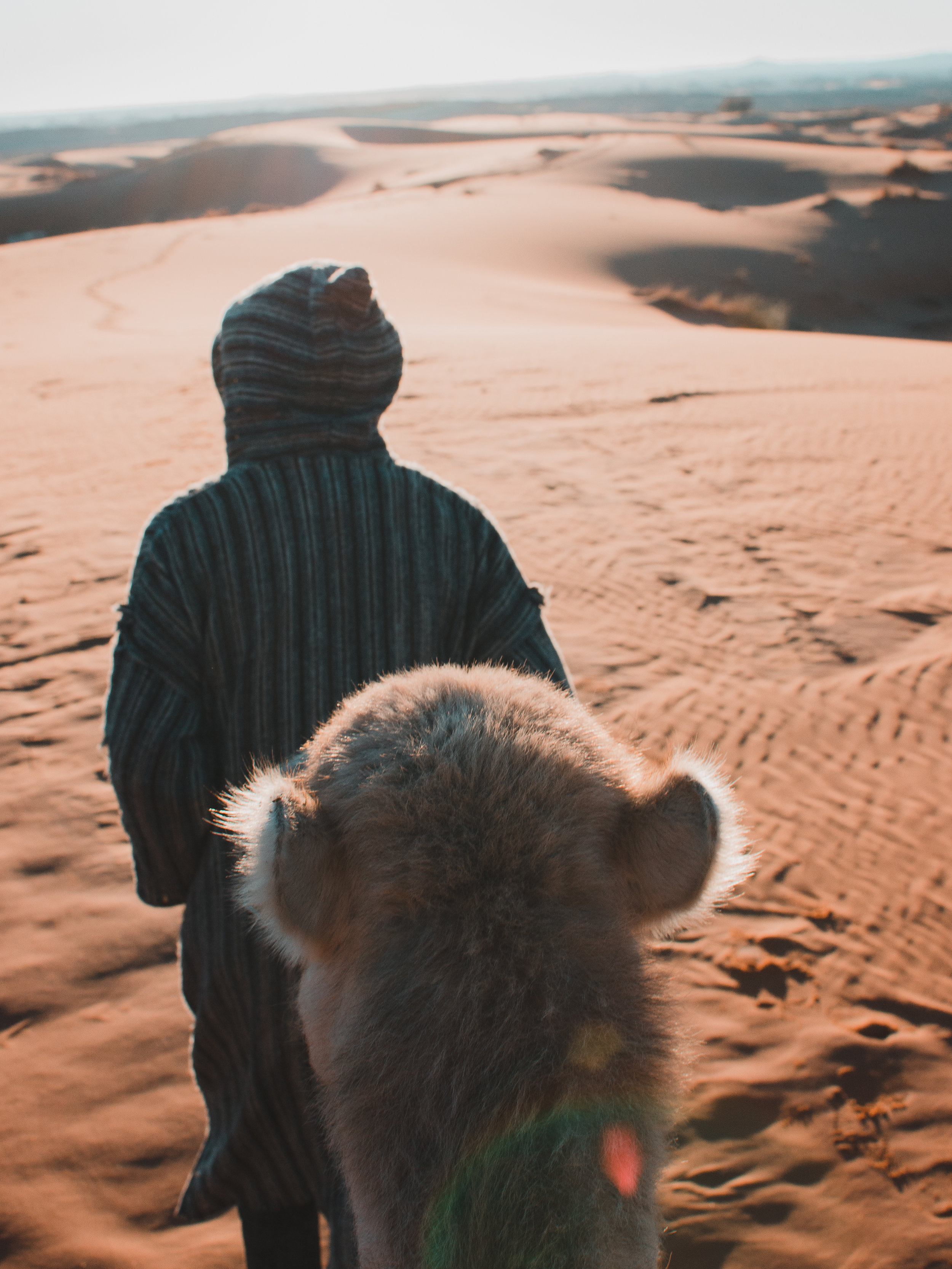 Riding a camel to see the sunrise in the Sahara Desert, Morocco
