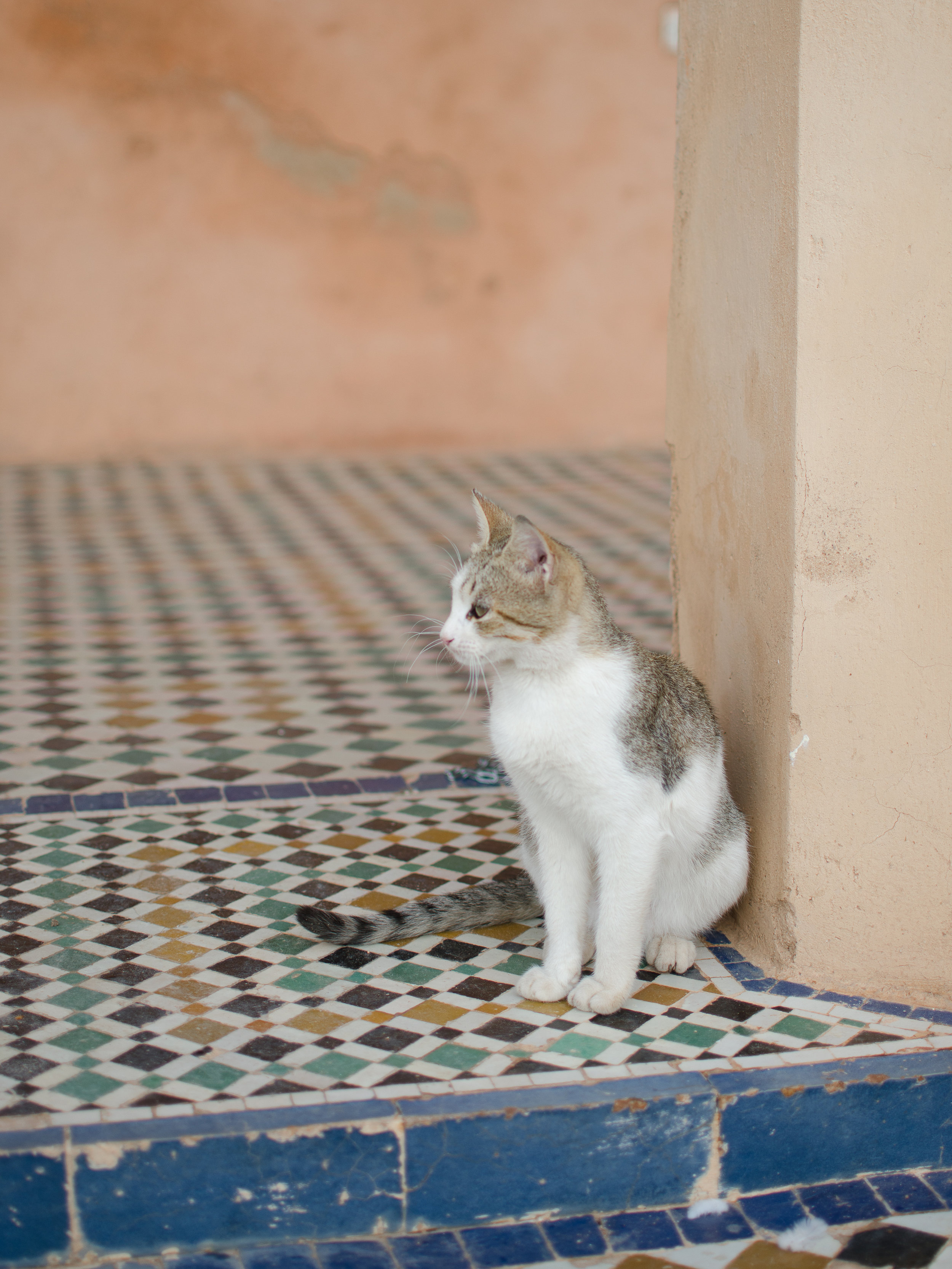 Marrakech is full of adorable, little cats. We found this one at the Badi Palace
