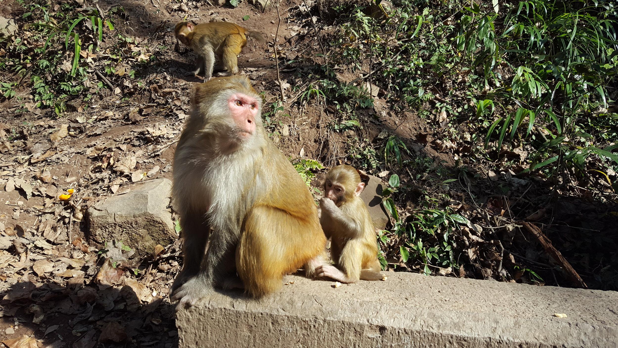 A baby monkey and its mamma in Zhangjiajie, China