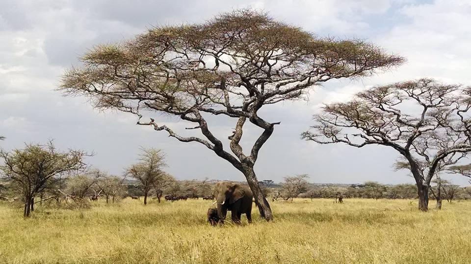 Our 3-day safari took us to through the Serengeti and Ngorongoro Crater