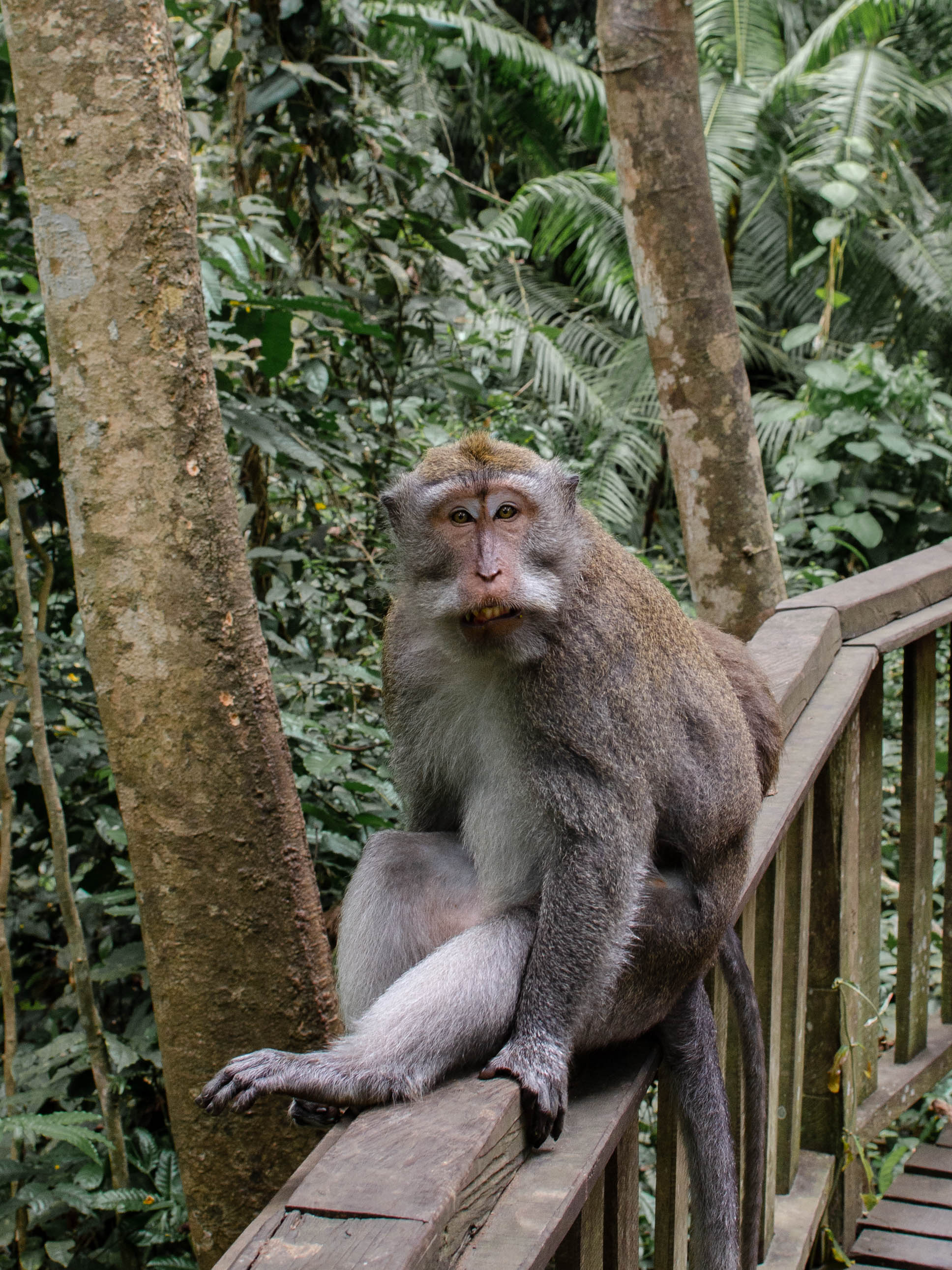 Monkey Forest in Ubud, Bali