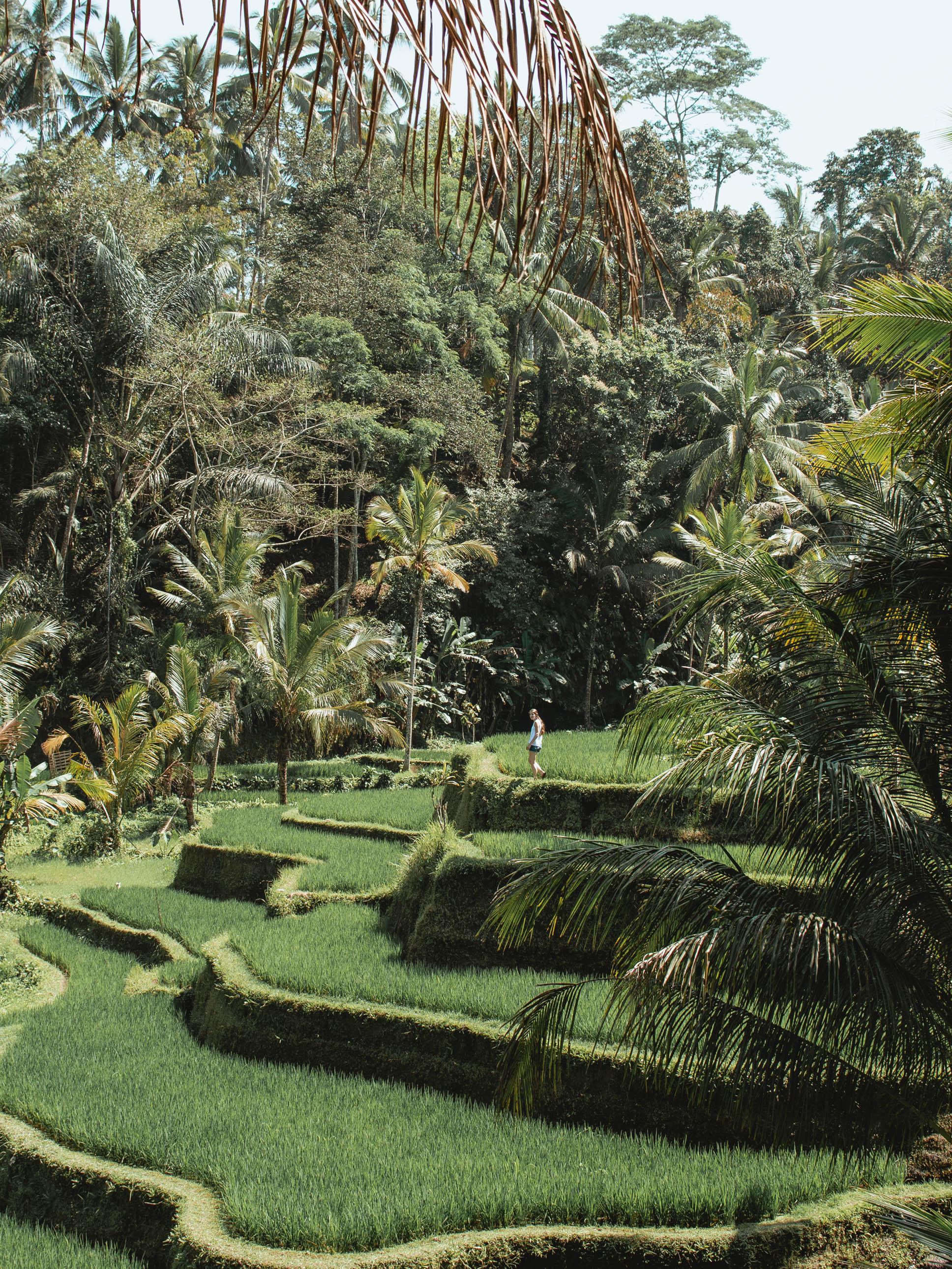 Tegalalang Rice Terraces in Ubud, Bali